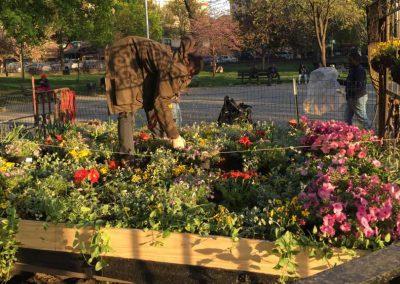 FLOWER-BED-MARCUS-GARVEY-TENDING-