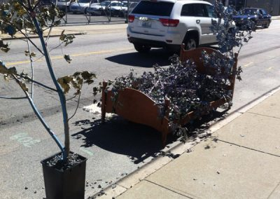 bed-of-leaves-car
